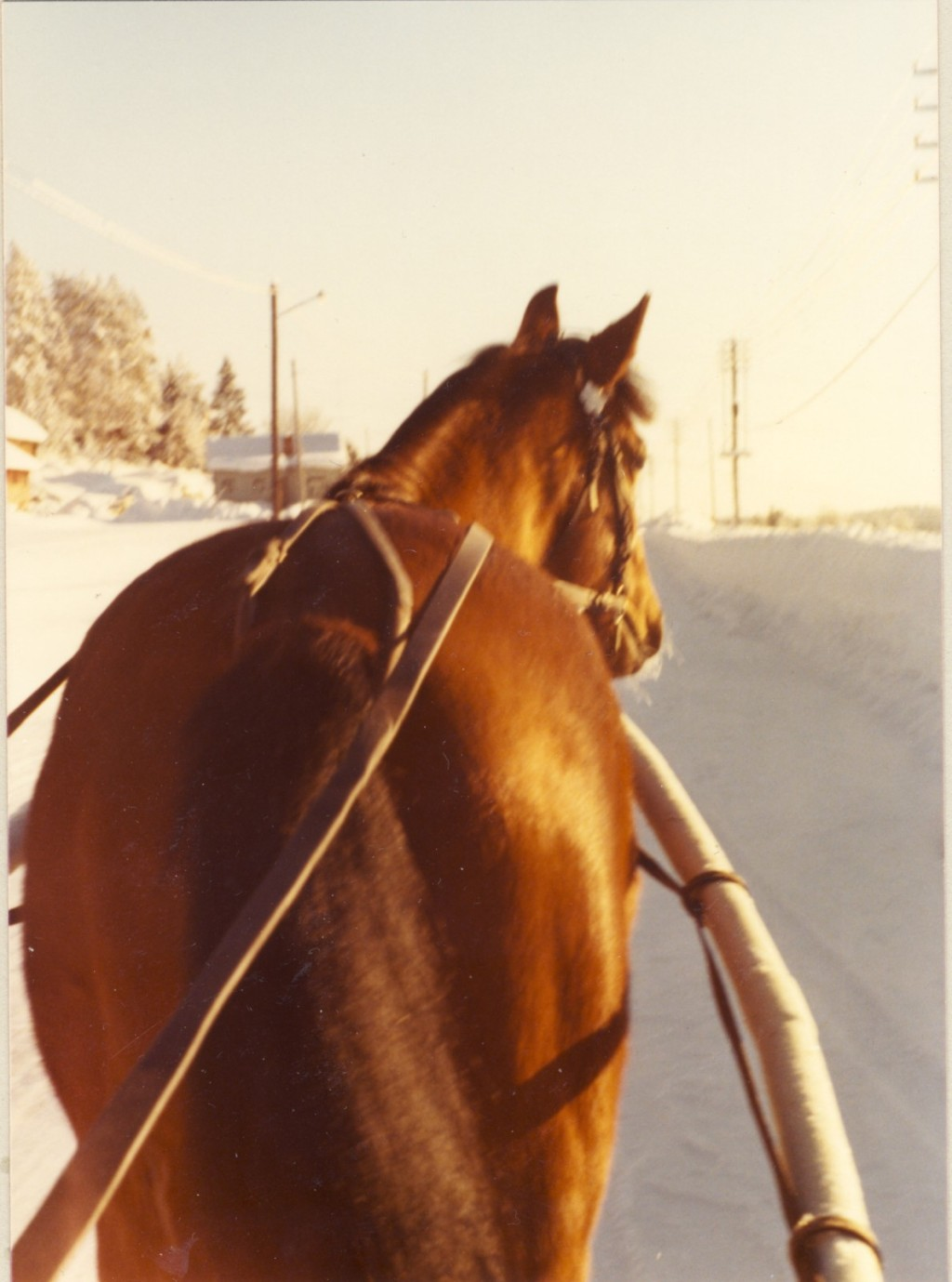 Lonius vintern 1976