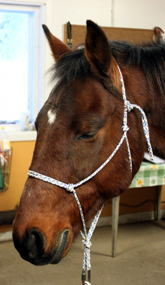 Hästen processar under en ET session. Foto och copyright Stig Nilsson