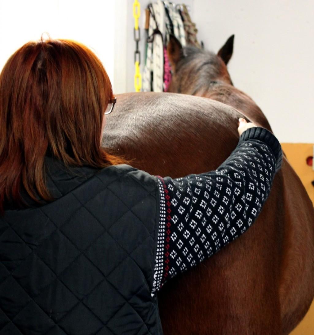 Hästens kroppshalvor jämförs. Foto och copyright Stig Nilsson