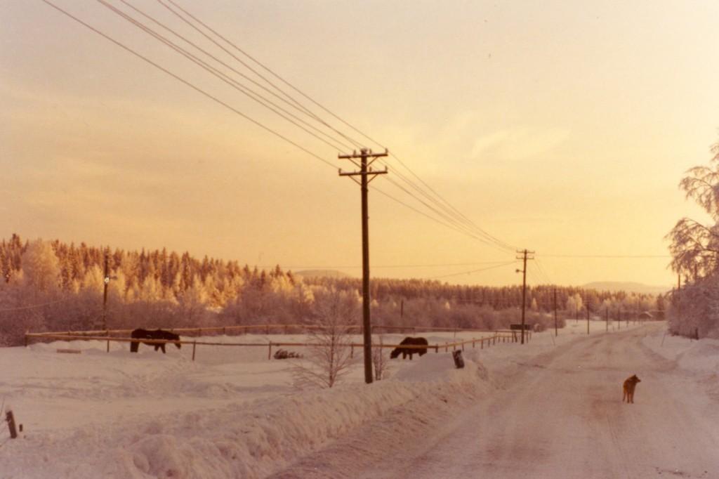 Vinterdag Långvattnet 1976